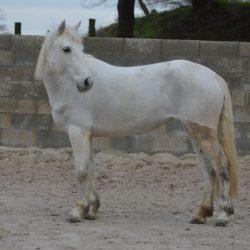Jument poney PENNY 6 ans 1