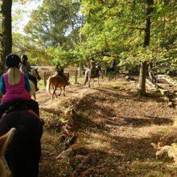 chevaux rando