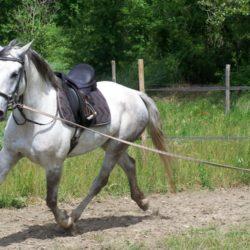 01_chevaux_154