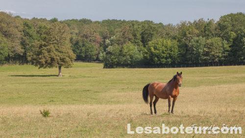 Ecuries de Propriétaire vers Bourg en Bresse Ain