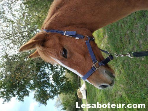 Pouliche visible près de Fontainebleau - Chevaux a vendre - Le Saboteur
