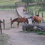 chevaux-dans-les-couloirs.jpg