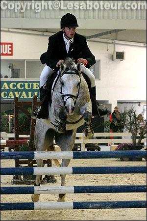 Cheval shagya arabe photos et standard de la race - Salon du cheval montpellier ...