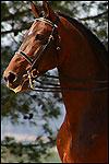 Race de chevaux pre