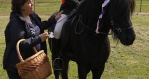 FFCI chevaux islandais