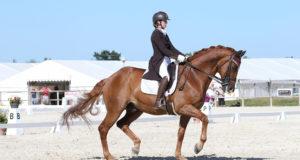 dressage equitation